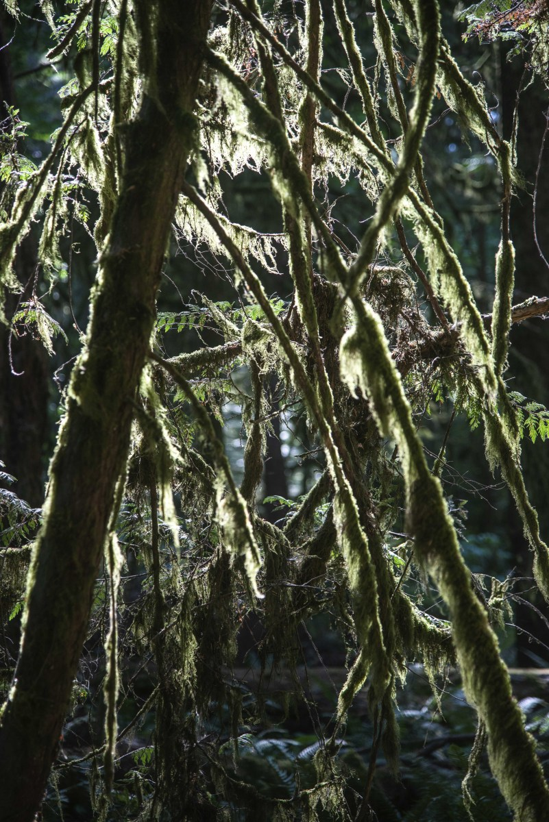 Cathedral-Grove_5