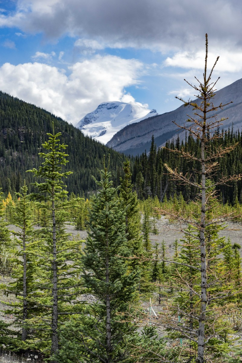 Icefield_7