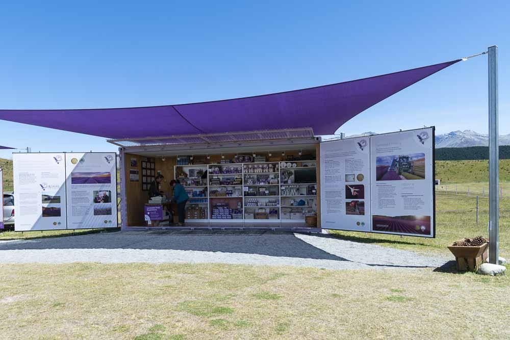 Lavendel in Neuseeland