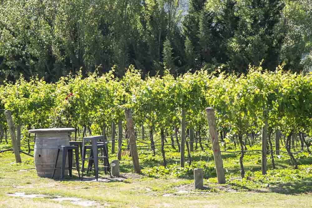 Weinregion Gibbston Valley
