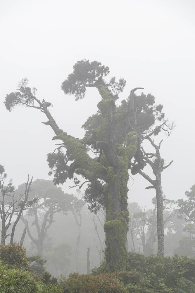 Bäume im nebligen Regenwald