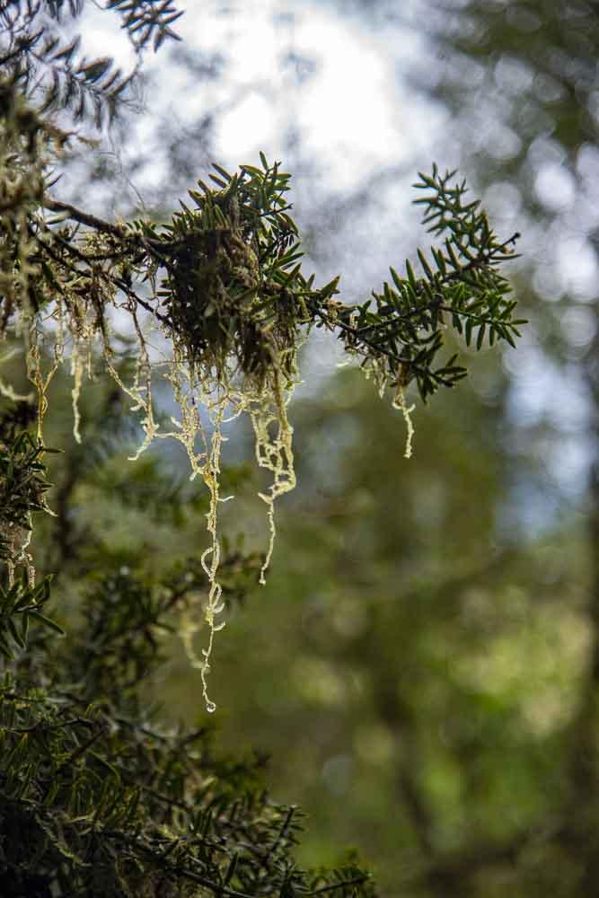 Wald am Lake Matheson Neuseeland