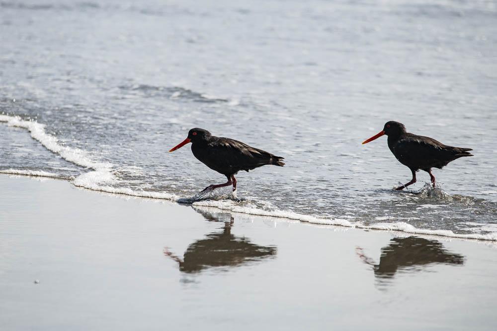 Outer Beach