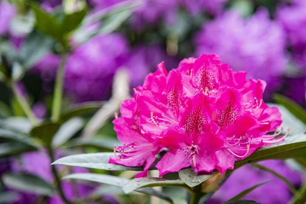 Blütenpracht im Schlosspark