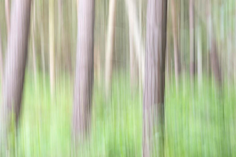 Darßer Wald abstrakt