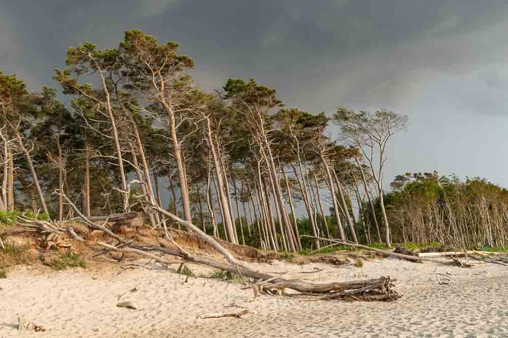 Bäume am Weststrand