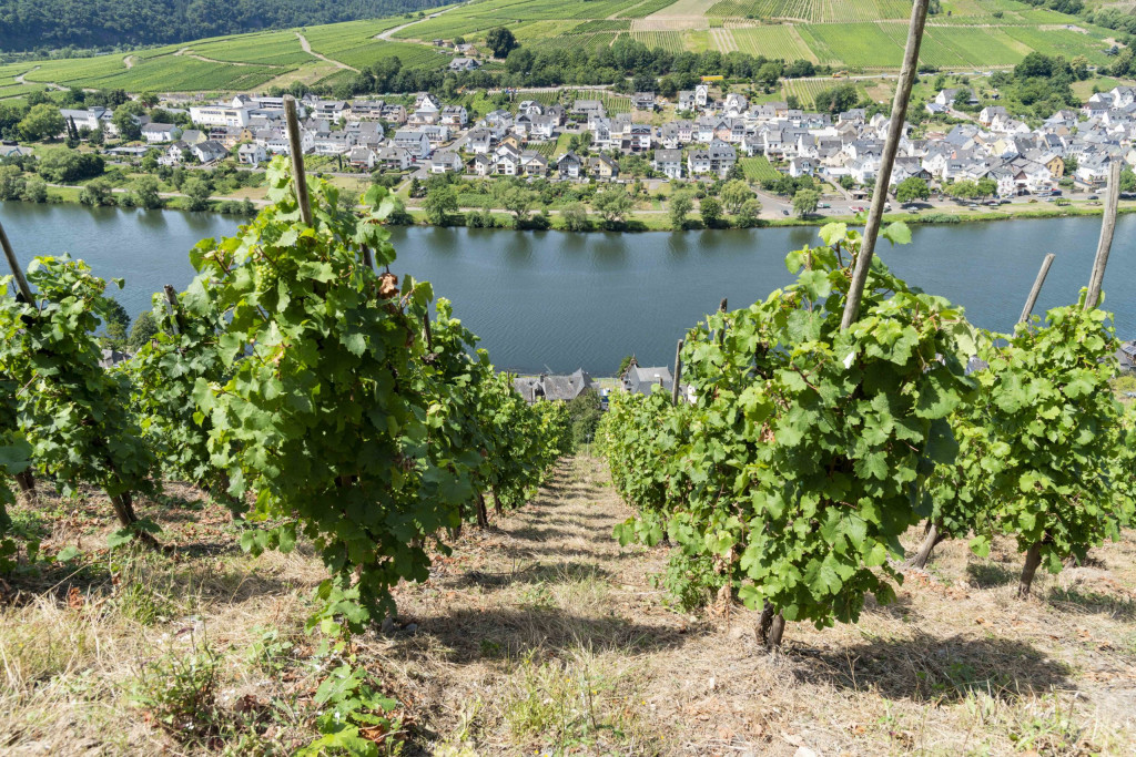 steile Weinberge in Zell