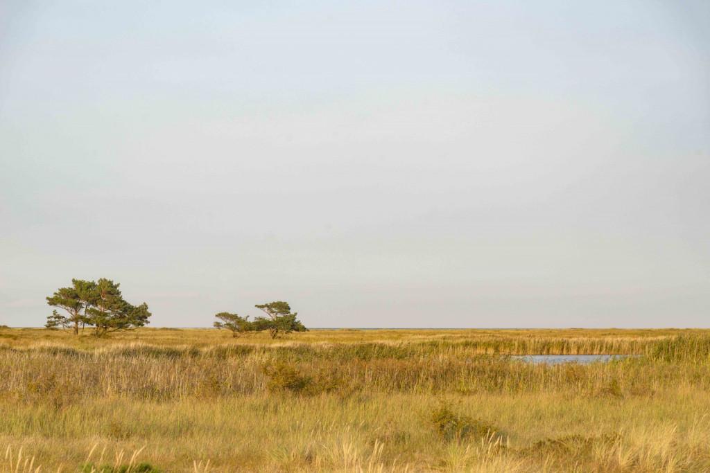 Ausblick vom Bohlenweg im Nationalpark