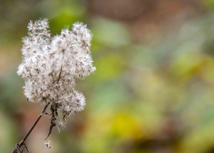 Herbststimmung am Blauen See Ratingen
