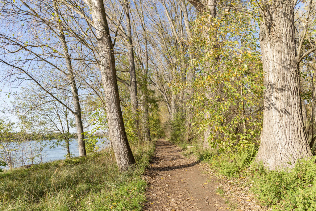 holpriger Weg am Rheinufer