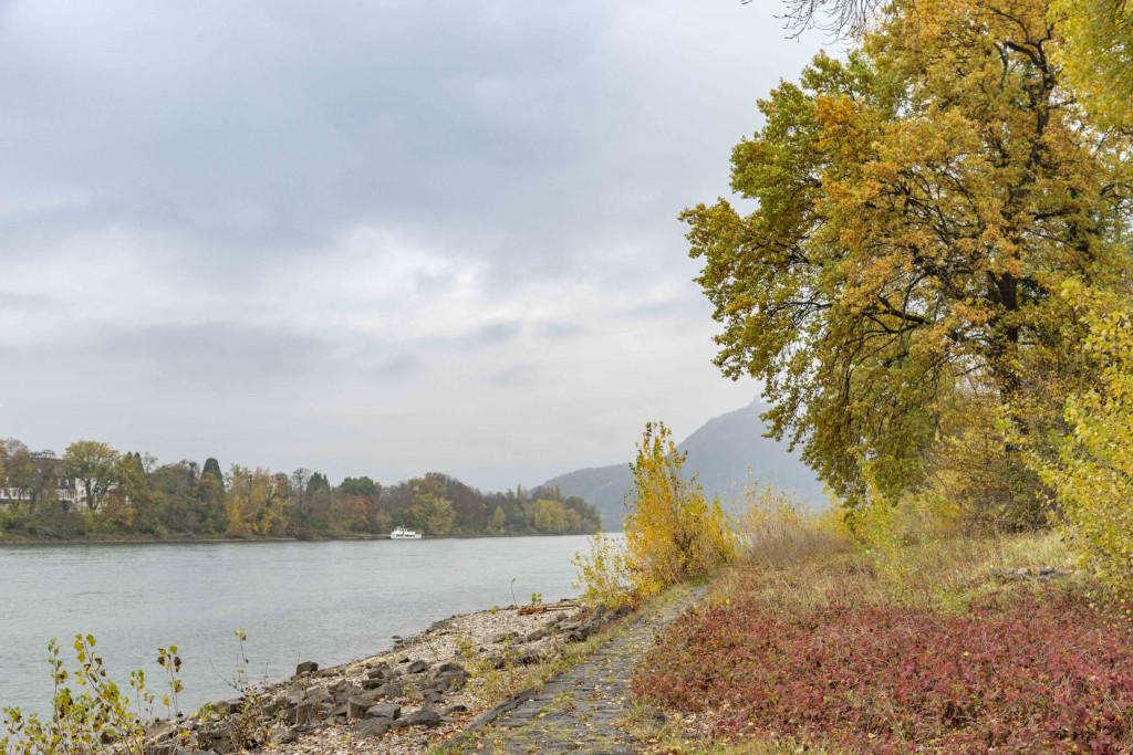 Blick von Grafenwerth über den Rhein