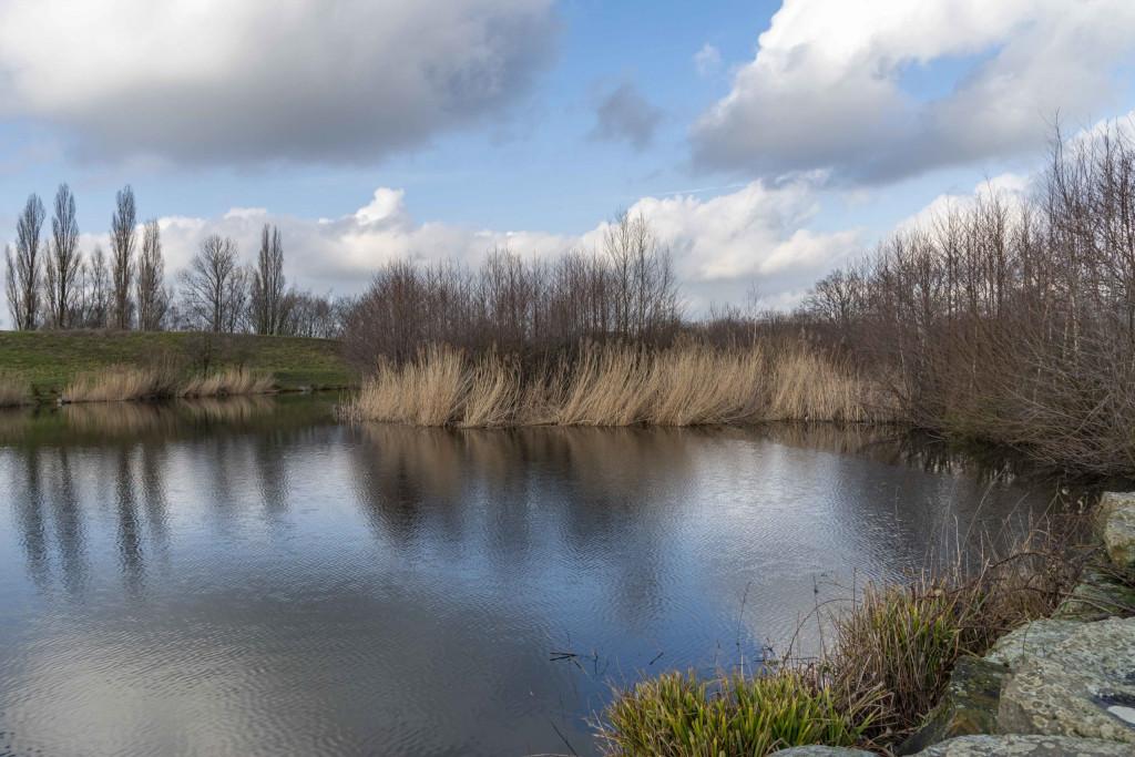 Teich im Erin-Park