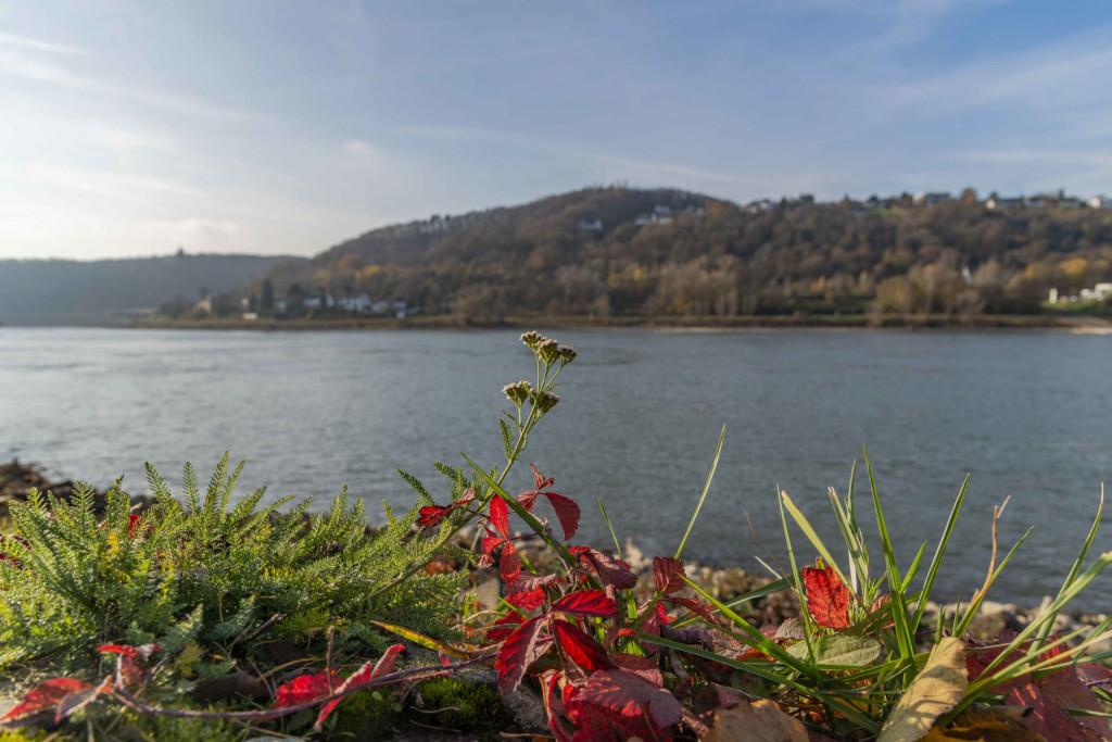 am Rhein in Unkel