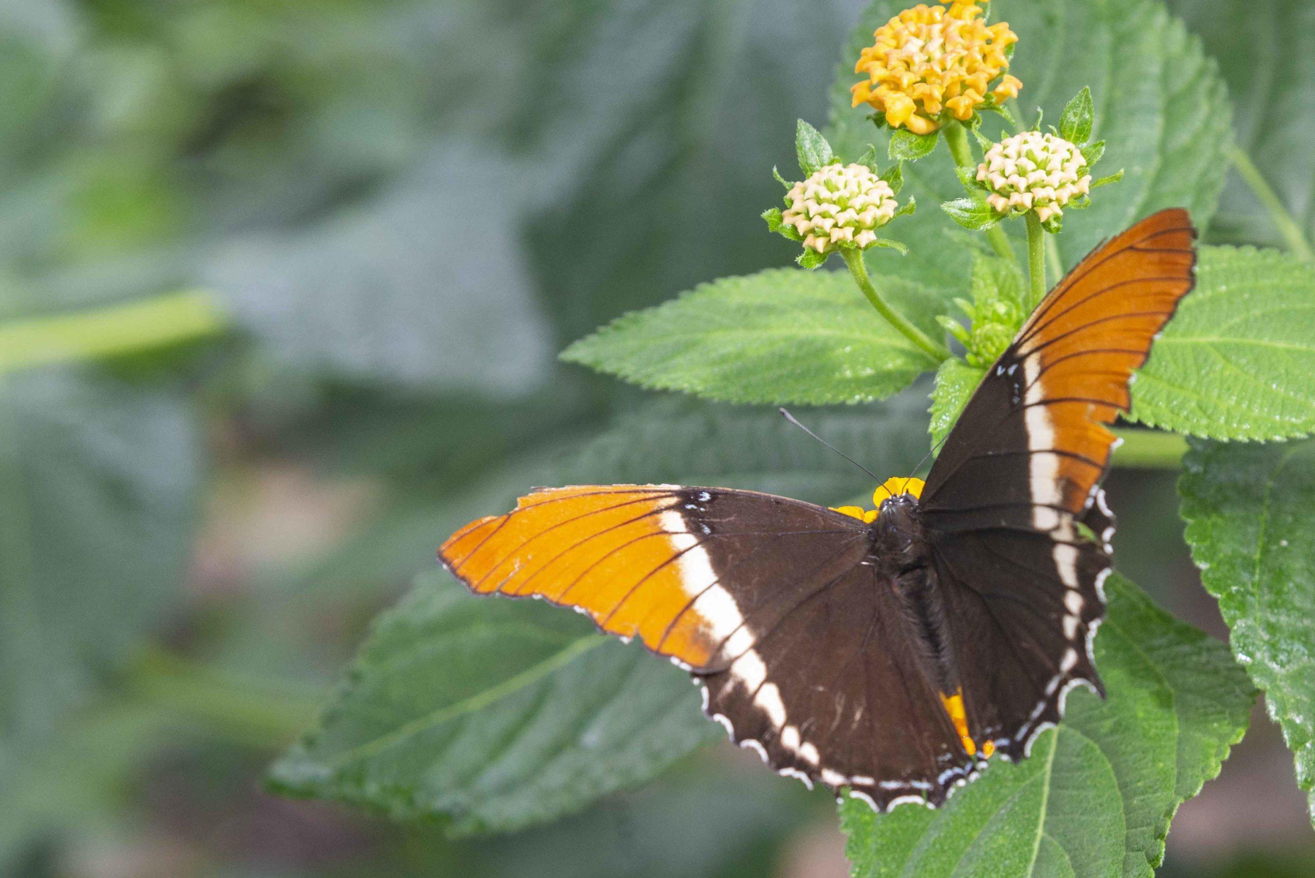 Jardin Papillon Grevenmacher