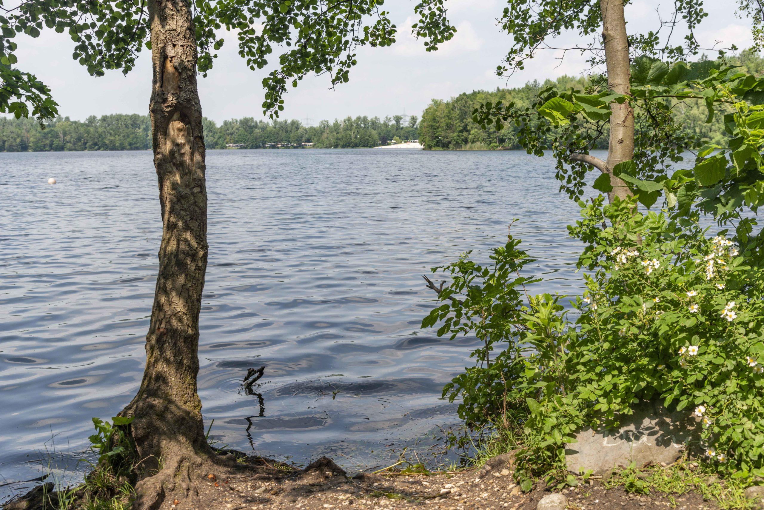 am Ufer des Liblarer Sees