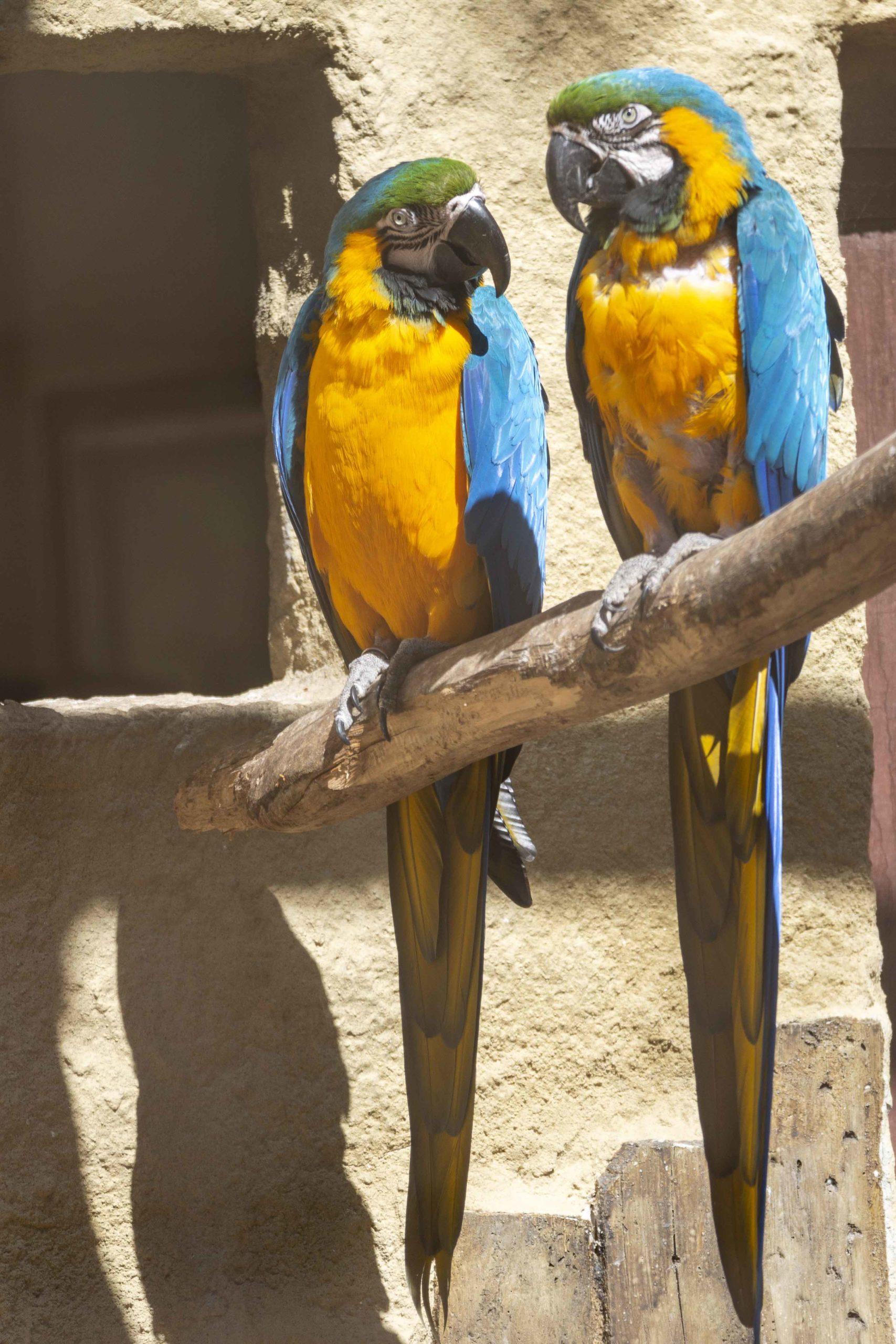 Papageien im Parc Merveilleux Luxemburg